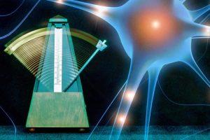 neuron-brain-timing