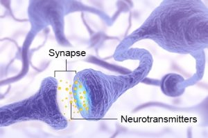 neurotransmitters-and-synapse